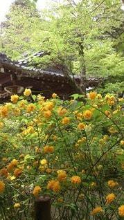 花の写真・画像素材[32866]