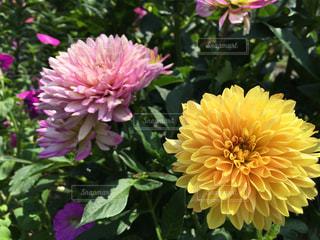 花の写真・画像素材[147721]