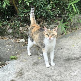 猫の写真・画像素材[675320]