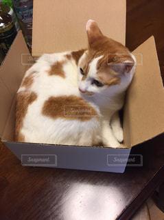 猫の写真・画像素材[663117]