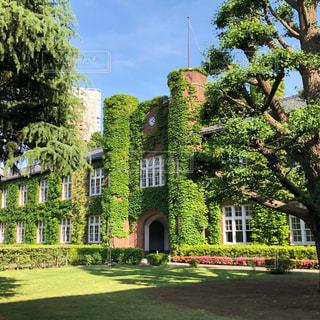 立教大学キャンパスの写真・画像素材[2435822]
