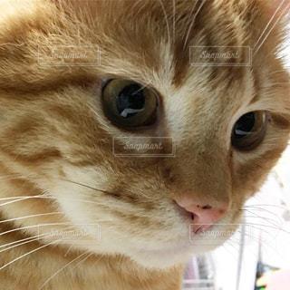 お目クリクリの美猫🥰の写真・画像素材[663197]