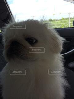 動物 可愛い 犬 ペット 癒しの写真・画像素材[698981]