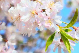 花のクローズアップの写真・画像素材[2098750]