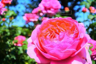 花のクローズアップの写真・画像素材[2099150]