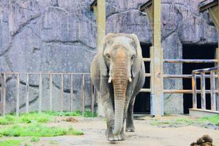 建物の前に立っている象の写真・画像素材[2104665]