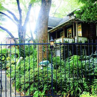 木と家の写真・画像素材[2112403]