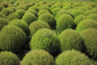 庭の植物の写真・画像素材[931336]