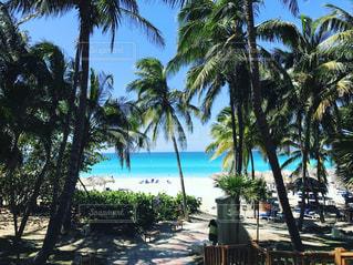 ヤシの木とビーチの写真・画像素材[759497]
