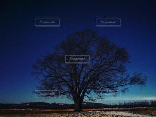 ハルニレの木の写真・画像素材[1716589]