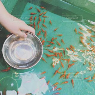 金魚 - No.664060