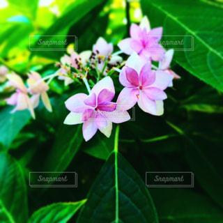 花の写真・画像素材[664302]