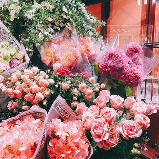 ピンクの花のグループの写真・画像素材[3085331]