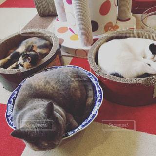 猫の写真・画像素材[664716]