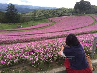 花の写真・画像素材[664743]