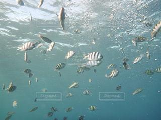 海の写真・画像素材[664815]