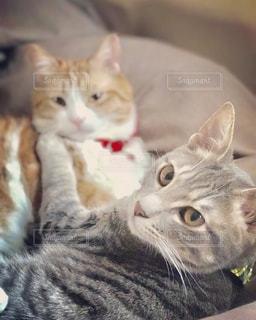 猫の写真・画像素材[664837]