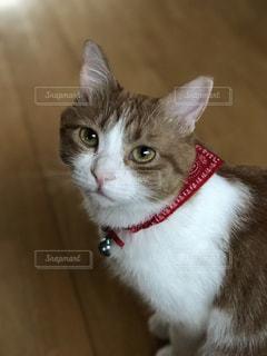 近くに猫のアップの写真・画像素材[745672]