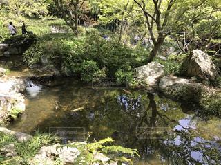 自然の写真・画像素材[668272]