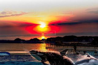 海の写真・画像素材[666136]
