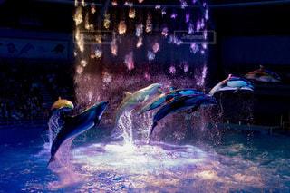 イルカの写真・画像素材[666181]