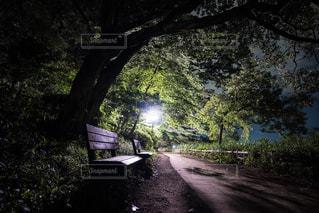 公園の写真・画像素材[666874]