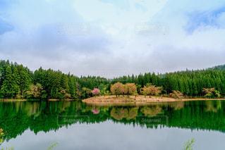 桜の写真・画像素材[666877]
