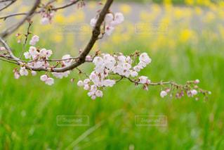 春の写真・画像素材[667190]