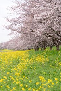 春の写真・画像素材[667191]