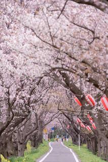 春の写真・画像素材[667192]