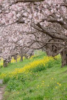 春の写真・画像素材[667193]