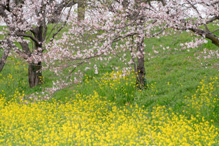 春の写真・画像素材[667194]