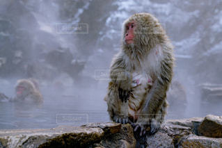猿の写真・画像素材[668476]