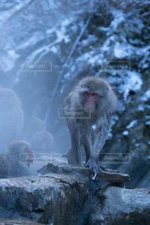 猿の写真・画像素材[668480]