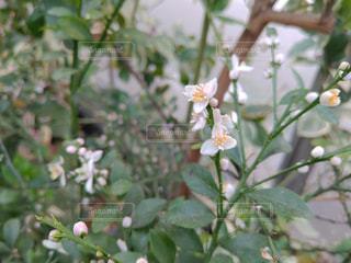 花のクローズアップの写真・画像素材[2102400]