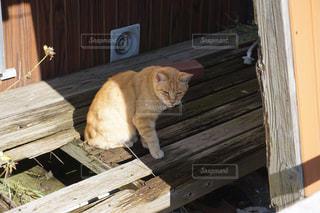 年老いた猫の写真・画像素材[1120686]