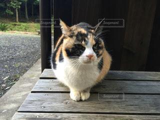 猫 - No.665495