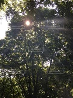 屋外の写真・画像素材[36641]