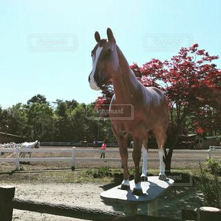 馬の写真・画像素材[665761]