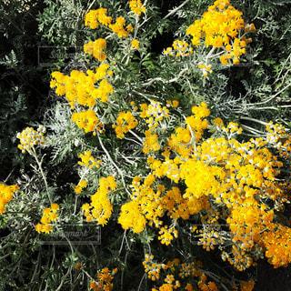 花の写真・画像素材[665697]