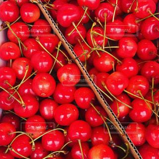 トマトの写真・画像素材[665715]