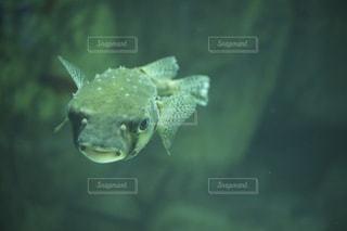 魚の写真・画像素材[673027]