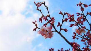 春 - No.666458