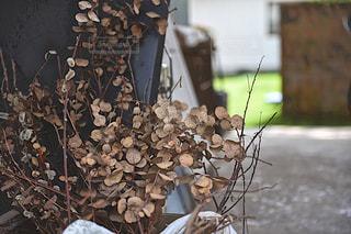 お庭のドライフラワーの写真・画像素材[1232597]