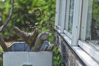 窓のそばの流木の写真・画像素材[1232601]