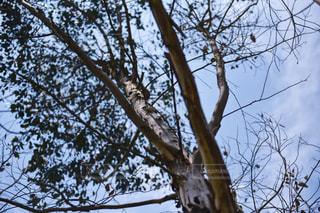 下から見た樹木と空の写真・画像素材[1232602]