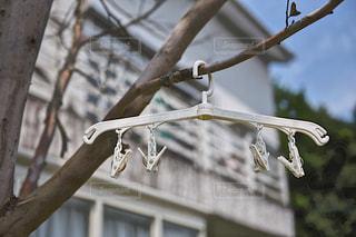 木の枝にハンガー 斬新な発想の写真・画像素材[1232603]