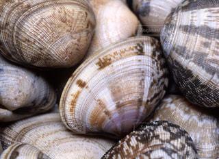 貝の写真・画像素材[668701]