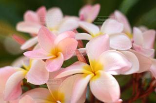 花の写真・画像素材[670544]