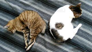 猫の写真・画像素材[670611]